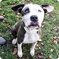 Adopt A Pet :: Marcy - Sacramento, CA