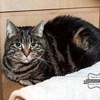 Adopt A Pet :: Willow - Westminster, MD