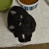 Adopt A Pet :: Janae151884 - Atlanta, GA