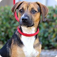 Adopt A Pet :: Baccala - San Diego, CA