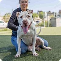 Adopt A Pet :: HATTIE - Martinez, CA