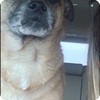 Adopt A Pet :: Kaydee - Tallahassee, FL