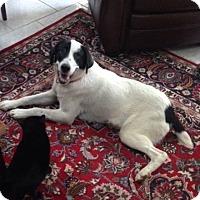 Adopt A Pet :: Bessie - Willingboro, NJ