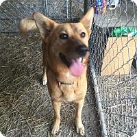 Adopt A Pet :: Talia - Rexford, NY