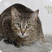 Adopt A Pet :: Tovac - West Des Moines, IA