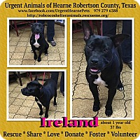 Adopt A Pet :: Ireland - Hearne, TX