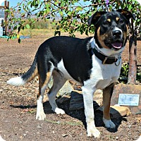 Adopt A Pet :: Rosco - Yreka, CA