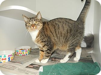 Domestic Shorthair Cat for adoption in Newport, North Carolina - Sviskers & Marizpan (NB PS)