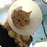 Adopt A Pet :: A500301 - San Bernardino, CA
