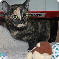 Adopt A Pet :: Zora - New Castle, PA