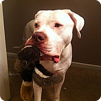 Adopt A Pet :: Rocky -Adopted! - Huntsville, ON