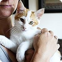 Adopt A Pet :: Kramer - Xenia, OH