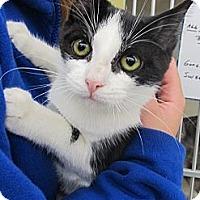 Adopt A Pet :: Topaz - Riverhead, NY