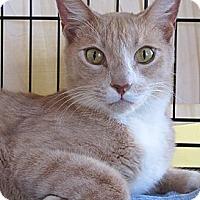 Adopt A Pet :: Charlie - Seminole, FL