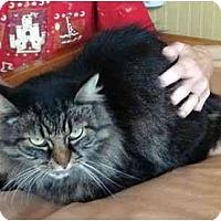 Adopt A Pet :: Sammie - Delmont, PA