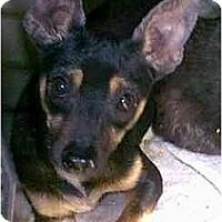 Adopt A Pet :: MANCHESTER - dewey, AZ