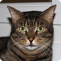 Adopt A Pet :: Colby - North Branford, CT