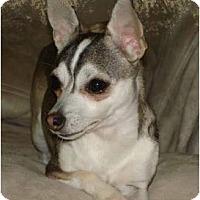 Adopt A Pet :: Lana - Cleveland, OH