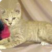 Adopt A Pet :: Kingston - Powell, OH