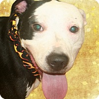 Adopt A Pet :: Madison - Cincinnati, OH
