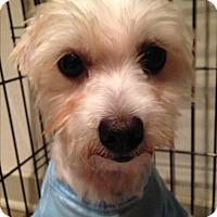Adopt A Pet :: Mattie - Ocean Ridge, FL