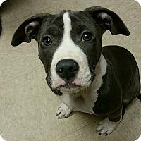 Adopt A Pet :: Emily - Norcross, GA