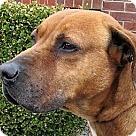 Adopt A Pet :: Armani