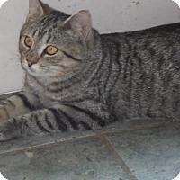 Adopt A Pet :: Grizzley - Breinigsville, PA