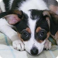 Adopt A Pet :: Maizie - REDDING, CA