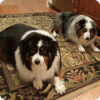 Adopt A Pet :: Abby and Lexi - Elk River, MN
