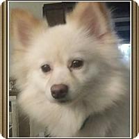 Adopt A Pet :: Secret - conroe, TX