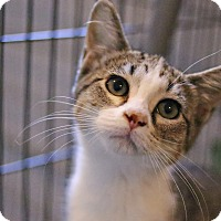 Adopt A Pet :: Tickles - Lincoln, NE