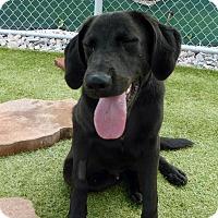 Adopt A Pet :: Rocky #5 - Yorktown, VA