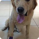 Adopt A Pet :: Cullen