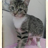 Adopt A Pet :: Montana - Trevose, PA