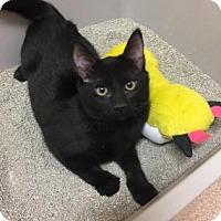 Adopt A Pet :: Buster - Cumming, GA