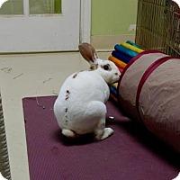Adopt A Pet :: Fergus - Oak Park, IL