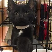 Adopt A Pet :: Duck - Philadelphia, PA