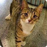 Adopt A Pet :: Noodle - Michigan City, IN