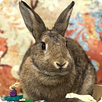 Adopt A Pet :: Ember - San Diego, CA