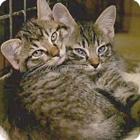 Adopt A Pet :: Finnegan and Colin - Montclair, NJ
