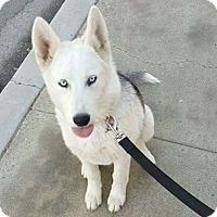 Adopt A Pet :: Jemma - Thousand Oaks, CA