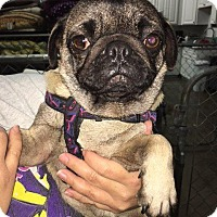 Adopt A Pet :: Jalen - Gardena, CA