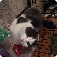Adopt A Pet :: Juni - Carlisle, PA