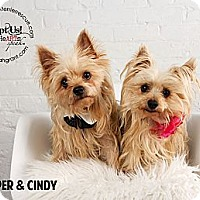Adopt A Pet :: Pepper & Cindy - Omaha, NE