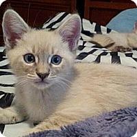 Adopt A Pet :: CharMing - Irvine, CA