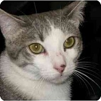 Adopt A Pet :: Cory - Manalapan, NJ