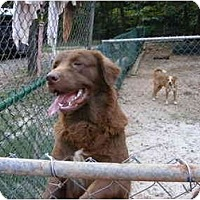 Adopt A Pet :: Daniel - E Windsor, CT