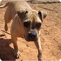 Adopt A Pet :: Faith - Blanchard, OK