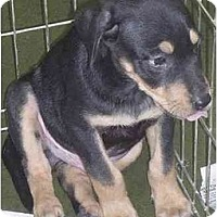 Adopt A Pet :: Rolly - Fowler, CA